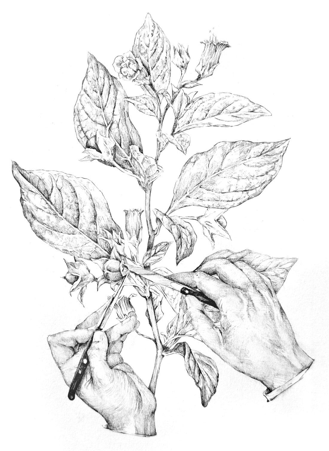 Anatomía y flora. Los dibujos de Nunzio Paci