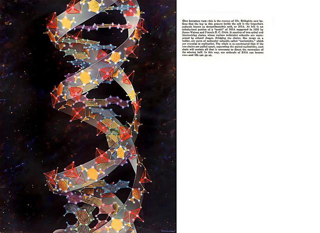"""Una representación del ADN """"estrellado"""""""